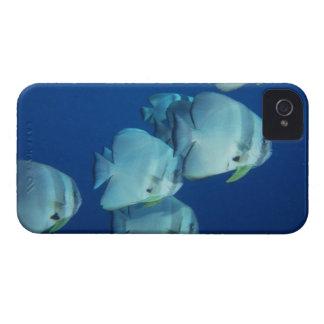Escuela de los pescados 5 iPhone 4 carcasas