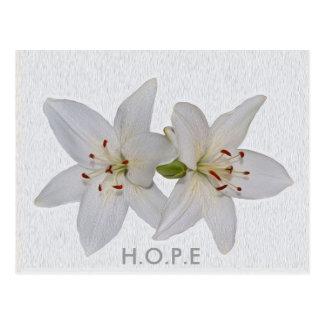 Esperanza que casa la flor asiática blanca del postales