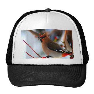 espere el pájaro del waxwing bohemio del amor de l gorras