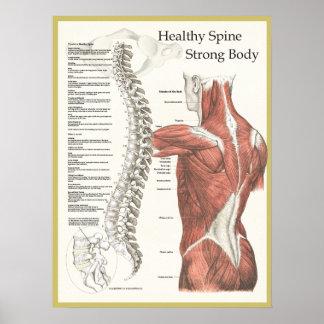 Espina dorsal sana, poster fuerte de la póster