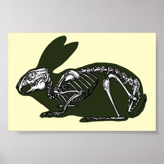 esqueleto del conejo póster