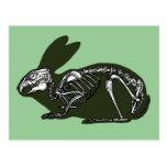 esqueleto del conejo tarjeta postal