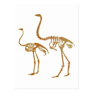 Esqueleto del Moa y de la avestruz Postal