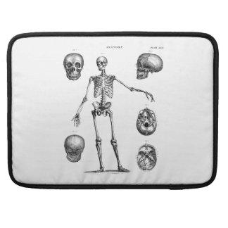 Esqueletos antiguos esqueléticos de la anatomía de fundas para macbooks