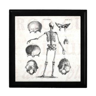 Esqueletos antiguos esqueléticos de la anatomía de cajas de recuerdo