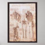 Esqueletos humanos Leonardo da Vinci de los dibujo Impresiones