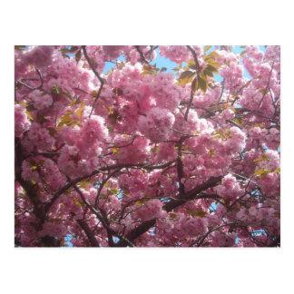 Ésta es mi postal de la flor de cerezo