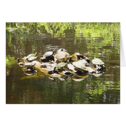 establecimiento de una red de la tortuga tarjeta de felicitación