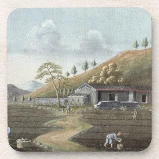 Establecimiento del té (w/c en el papel) posavasos
