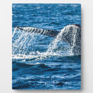 Estado de Washington de la ballena jorobada Placa Expositora