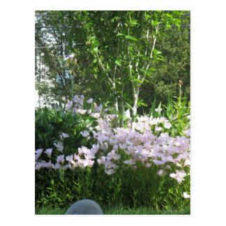 Estado jardín flor de la foto de New Jersey, los Postal