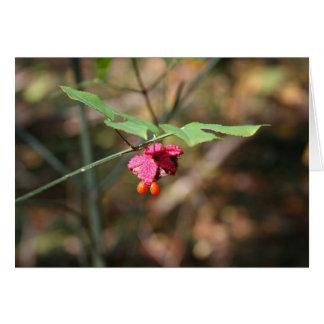 Estallar la tarjeta del corazón (Euonymus