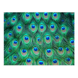estampado de animales del pavo real - plumas postal