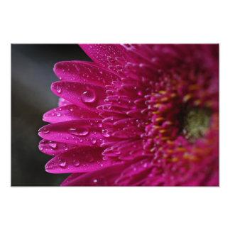 Estampado de flores de las rosas fuertes foto