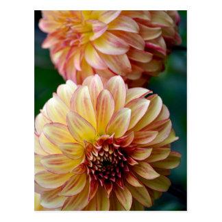 Estampado de flores hermoso de la dalia postal