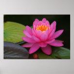 Estampado de flores rosado de Lotus Poster