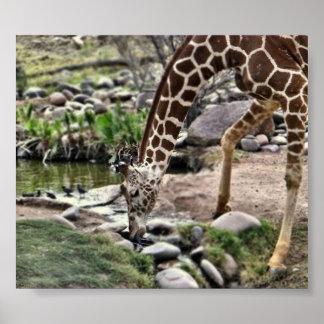 Estampado de girafa gracioso póster