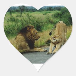 Estiramiento de la leona pegatina en forma de corazón