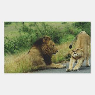 Estiramiento de la leona pegatina rectangular