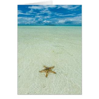 Estrella de mar en el agua poco profunda, Palau Tarjeta