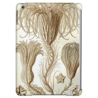 Estrellas de pluma de Ernst Haeckel Crinoidea