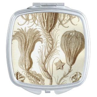 Estrellas de pluma de Ernst Haeckel Crinoidea Espejos De Viaje
