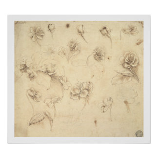 Estudio de las flores Hierba-como de las plantas ( Póster