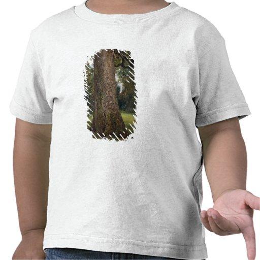 Estudio del tronco de un árbol de olmo, c.1821 (ac camiseta