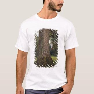 Estudio del tronco de un árbol de olmo, c.1821 camiseta