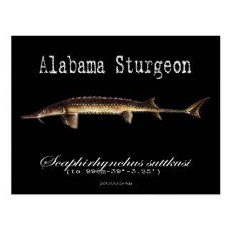Esturión-Negro-Postal de Alabama Postal
