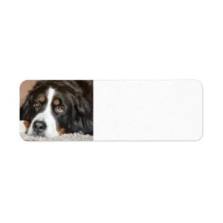 Etiqueta colocación del perro de montaña bernese