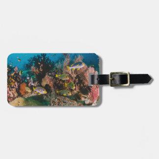 Etiqueta de encargo del equipaje del arrecife de
