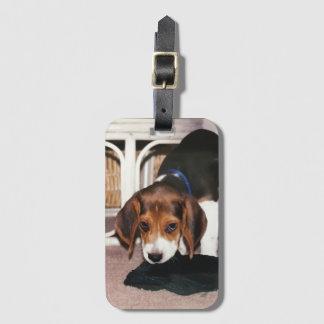 Etiqueta del equipaje con el perrito del beagle