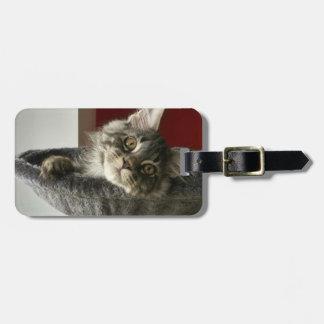 Etiqueta del equipaje del gatito del Coon de Maine