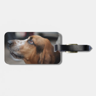 Etiqueta del equipaje del perro