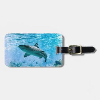 Etiqueta del equipaje del tiburón del vintage
