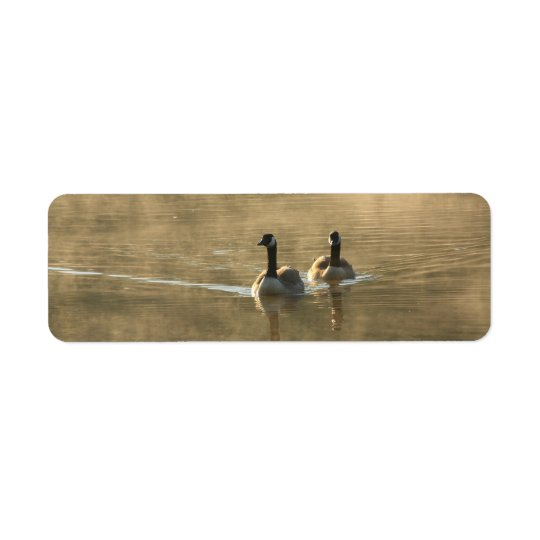 Etiqueta dos gansos de Canadá que nadan en el río por salid