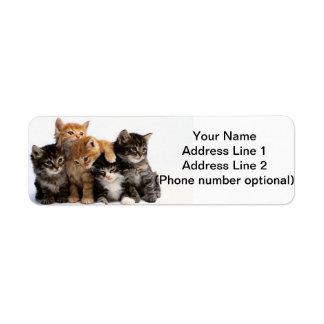 Etiqueta gatitos