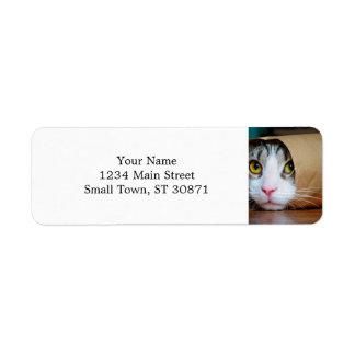 Etiqueta Gato de papel - gatos divertidos - meme del gato -