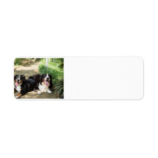 Etiqueta grupo del moho del perro de montaña bernese