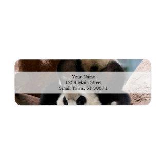 Etiqueta Pandas del bebé que juegan - panda linda de la