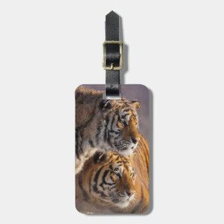 Etiqueta Para Maletas Dos tigres siberianos junto, China