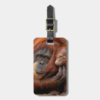 Etiqueta Para Maletas Orangután de la madre y del bebé