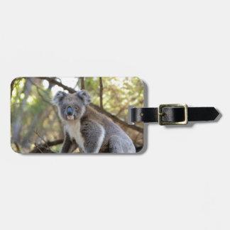 Etiqueta Para Maletas Oso de koala gris y blanco