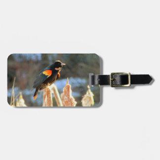 Etiqueta Para Maletas Pájaro negro de alas rojas en Cattail