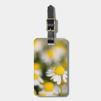 Etiqueta Para Maletas Primer de la flor de la manzanilla, Hungría