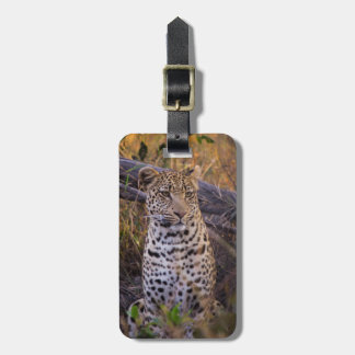 Etiqueta Para Maletas Sentada del leopardo, Botswana, África