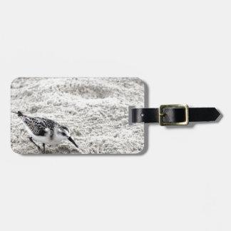 Etiqueta Para Maletas Un pájaro joven del chorlito nevado