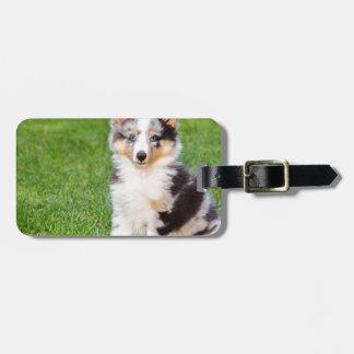 Etiqueta Para Maletas Un perro joven del sheltie que se sienta en hierba
