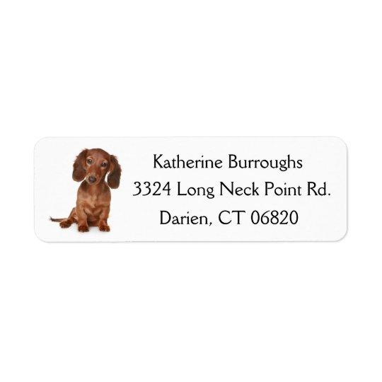 Etiqueta Perro de perrito del Dachshund de Brown